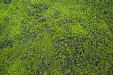 Flooded potholes in an open Eucalypytus woodland. Piccaninny Plains Wildlife Sanctuary, Cape York Peninsula, Queensland, Australia. March 2013