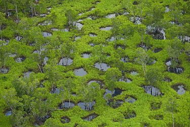 Aerial view of potholes in an open Eucalypytus woodland. Piccaninny Plains Wildlife Sanctuary, Cape York Peninsula, Queensland, Australia. March 2013