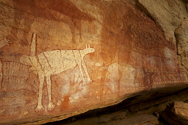 Quinkan rock art site called 'Wallaroo'. Wallaroo's are being attacked by dingos on this panel. Cape York Peninsula, Queensland, Australia.