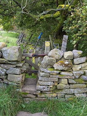 Gate through drystone wall, on public footpath. Wensleydale, Yorkshire Dales National Park, England, UK. September.