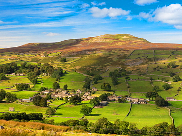 Hillside village surrounded by fields with drystone walls, moorland above. Healaugh, Swaledale, Yorkshire Dales National Park, England, UK. September 2019.