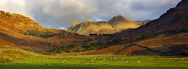The Langdale Pikes from Fell Foot Farm, Lake District National Park, Cumbria, England, November 2007