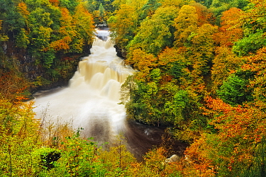 Autumn colour around the Falls of Clyde, Lanarkshire, Scotland, UK, October 2006.
