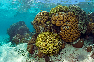 Coral reef habitat in the main channel, Aldabra, Indian Ocean