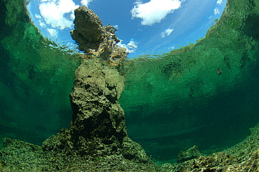 Underwater view of eroded coral in Bras Deux Cedres, an inlet in the coral island Grand Terre of Aldabra. The inlet is connected to the lagoon of Aldabra, Indian Ocean 2005