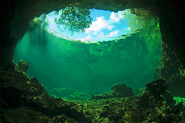 Underwater view from cave in Bras Deux Cedres, an inlet in the coral island Grand Terre of Aldabra. The inlet is connected to the lagoon of Aldabra, Indian Ocean 2005.