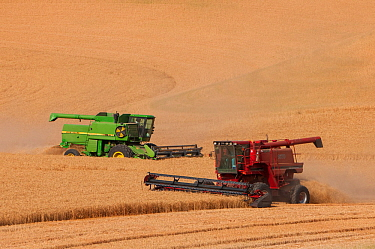 Combines harvesting wheat in the Palouse farming region of southeastern Washingon, USA, August