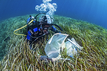 A researcher collecting data from the seagrass meadows (Posidonia oceanica), Sigri, Lesvos, North Aegean. The continous monitoring of the ecological status of the seagrass meadows is an inherent part...