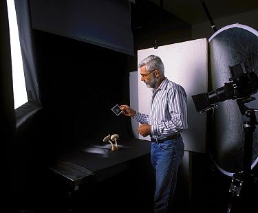 Photographer Yves Lanceau in his studio photographing spore dispersal pattern of False Death Cap fungus (Amanita citrina var. alba)