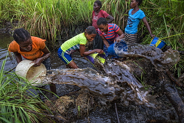 Women of Mpelu village practicinge agroforestry. Here they build makeshift dams out of mud, then sequester the fish, bucket out the water through nets and catch the fish. Democratic Republic of the Co...