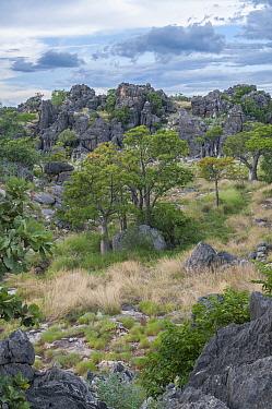Oscar Range, an exceptionally well preserved fossilized Devonian Reef, Kimberley, Western Australia.