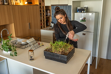 Emily Small, founder of Goongerah Wombat Orphanage, wildlife rescuer and carer, watering grass she is growing in her Melbourne inner city apartment that will be used to supplemently feed three orphane...