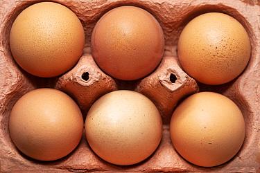 Cardboard carton with six hen's eggs