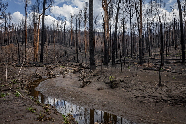 Martins Creek and surrounds after 2019/20 bushfires devastated the area. Until the fires, the edge of the creek had wet temperate rainforest along its edge, bounded by wet and damp forest. Martins Cre...