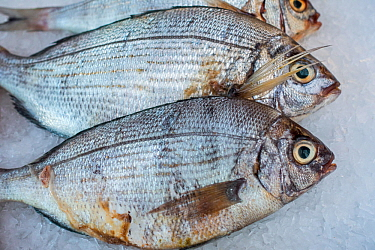 Bream (Abramis brama) on ice on display in fish shop / fish market