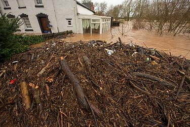 Flood debris caught under River Teme Bridge, Tenbury Wells, Storm Dennis, Worcestershire, 16 February 2020.