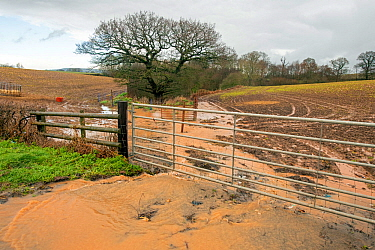 Flood water flowing across an arable field where a stream has been culverted, Storm Dennis, Teme Valley, Worcestershire, 16 February 2020.