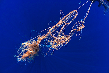 Discarded fishing lines, Atlantic Ocean.