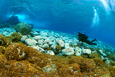 Diver moving along the seafloor, with rocks covered in algae, El Hierro, Canary Islands.