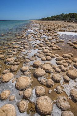 Lake Clifton Thrombolites, Yalgorup National Park, Western Australia. December 2015