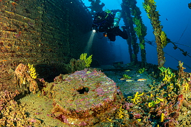 Rebreather diver exploring the sunken Brioni steam passenger/cargo ship, which sank in February 1930, with yellow sponges (Aplysina cavernicola), south-eastern coast of Vis Island, Croatia, Adriatic S...