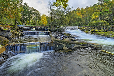 Salmon ladder on left next to the weir on the River (Afon) Ogwen at Ogwen Bank near Bethesda North Wales, UK, October 2019.