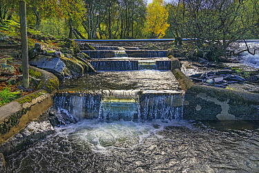 Salmon ladder next to the weir on the River (Afon) Ogwen at Ogwen Bank near Bethesda North Wales UK, October 2019.