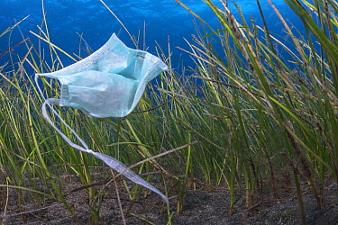 Face mask, used as PPE during Covid-19, improperly disposed of in the sea, Tenerife, Canary Islands