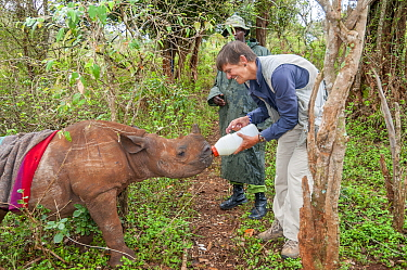 Black rhino (Diceros bicornis) orphan aged 18 months being bottle-fed by photographer Tui De Roy. Tui originally discovered the poached mother in bushes and alerted Game Managers to the orphaned calf...