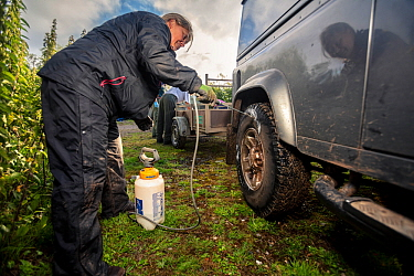 Tyres of a Land Rover used for transporting equipment for trapping and vaccinating European badgers (Meles meles) against TB are sprayed with disinfectant. North Somerset, UK. Badger vaccination progr...