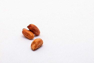 Peanuts, as used for feeding wild animals such as badgers and birds.