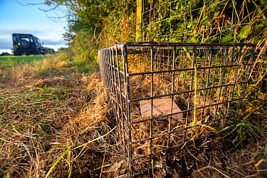 A cage trap is set to catch a European badger (Meles meles) as part of a programme to vaccinate badgers against TB in North Somerset, UK. Badger vaccination programmes are being carried out in England...