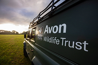 An Avon Wildlife Trust Land Rover on farmland at dawn during a programme to vaccinate European badgers (Meles meles) against TB in North Somerset, UK. Badger vaccination programmes are being carried o...