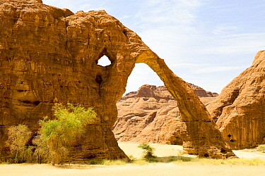 Elephant arch - eroded sandstone rock formation in the Ennedi Natural And Cultural Reserve, UNESCO World Heritage Site, Sahara Desert, Chad. September 2019.
