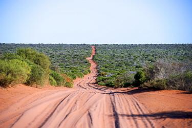 Dirt road through shrubland. Francois Peron National Park, Shark Bay, Western Australia. October 2019.