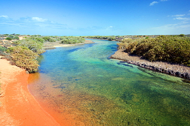 Mangrove relict. Little Lagoon, Francois Peron National Park, Shark Bay; Western Australia. October 2019.