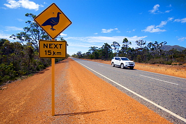 Road sign warning of Malleefowl (Leipoa ocellata) for the next 15km. Chester Pass Road, Western Australia. November 2019.