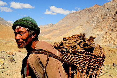 Ladakhi man carrying basket on back filled with Yak manure, mountains in background. Manure to be used as fire fuel. Photang Valley, Ladakh, India. September 2011.
