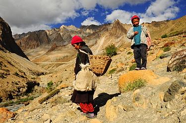 Ladakhi woman and her grandson walking in mountains near Sisir La mountain pass at altitude of 4720m. Zanskar, Ladakh, India. September 2011.