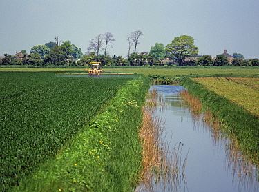 Tractor and sprayer spraying a wheat crop near a large l drainage canal on Cambridgeshire fenland in spring. England, UK.