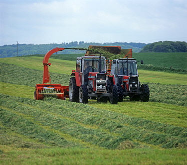 Massey Ferguson tractors and forager collecting cut grass in rows and discharging to a trailer for silage making, Wiltshire, England, UK.