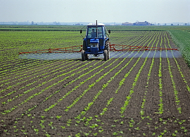 Ford tractor, mounted boom sprayer spraying rows of early post-emergence sugar beet crop, Cambridgeshire, England, UK. May