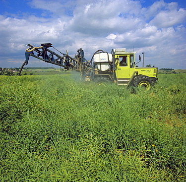 Spraying of oilseed rape crop with a dessicant, glyphosate, to promote even ripening for harvest, Northamptonshire, England, UK. June