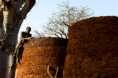 Somba man using mud to repair wall of family's takyenta, a traditional mud house. Land of the Batammariba, Benin, 2020.