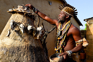 Somba chief and priest of Boukoumbe participating in Vodoo ceremony. Benin, 2020.