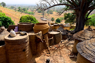 Village of the Tammari people with takyenta mud tower houses made from mud, branches and straw. Koutammakou, the Land of the Batammariba, Togo, 2020.