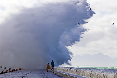 Storm waves sending spray over pier, Kalk Bay harbor, False Bay, Cape Town, South Africa.
