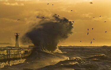 Storm blowing waves and spray over pier at Kalk Bay harbour at dawn, False Bay, Cape Town, South Africa.