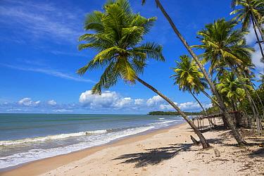 Sandy beach with coconut trees, Praia da Cueira, Boipeba Island, Bahia, Brazil.