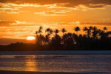 Sunset with coconut palms (Cocos nucifera) Boipeba Island, Bahia, Brazil.